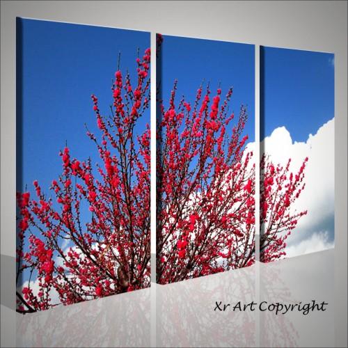 Quadri fiori rossi stampati su tela | Quadri moderni